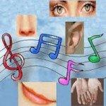 6 sentidos