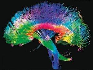 Caminos cerebrales